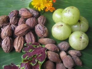 Haritaki, Bhibitaki und Amalaki, die drei Früchte